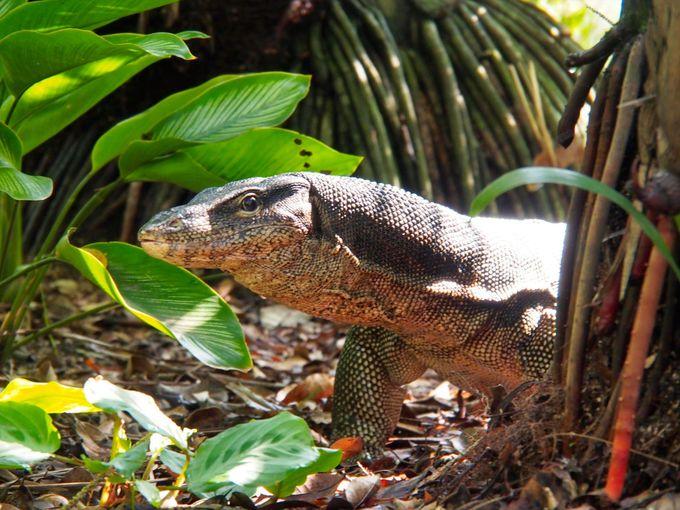 シンガポールの自然の宝庫は生物たちのパラダイス!
