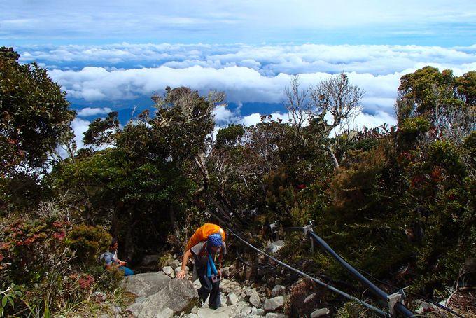 富士山より高い「キナバル山」には珍しい熱帯の植物が