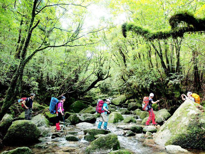 日本でいちばん美しい?世界遺産も評価した屋久島の自然