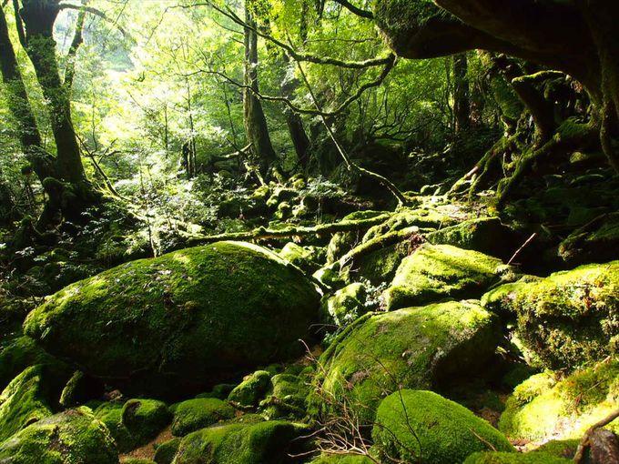 気軽に楽しめる屋久島お出かけコース!一度は行ってみたい日本の世界遺産「屋久島」(鹿児島)