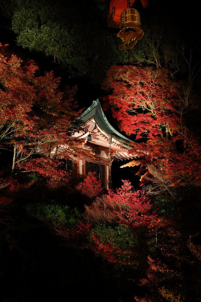 本堂の裏から眺める弁天堂は紅葉シーズンのベストビュー!