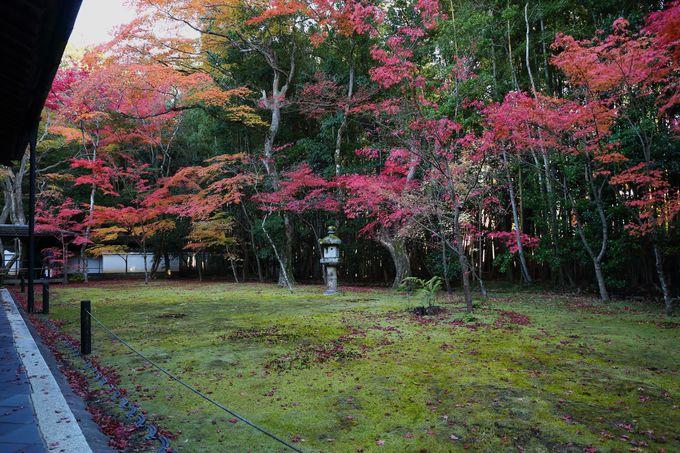 秋の紅葉シーズンには散り紅葉も堪能