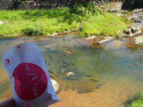 【現地徹底取材!】女子旅におすすめの温泉10選