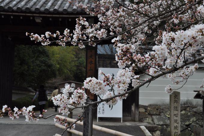 小野小町ゆかりの随心院。