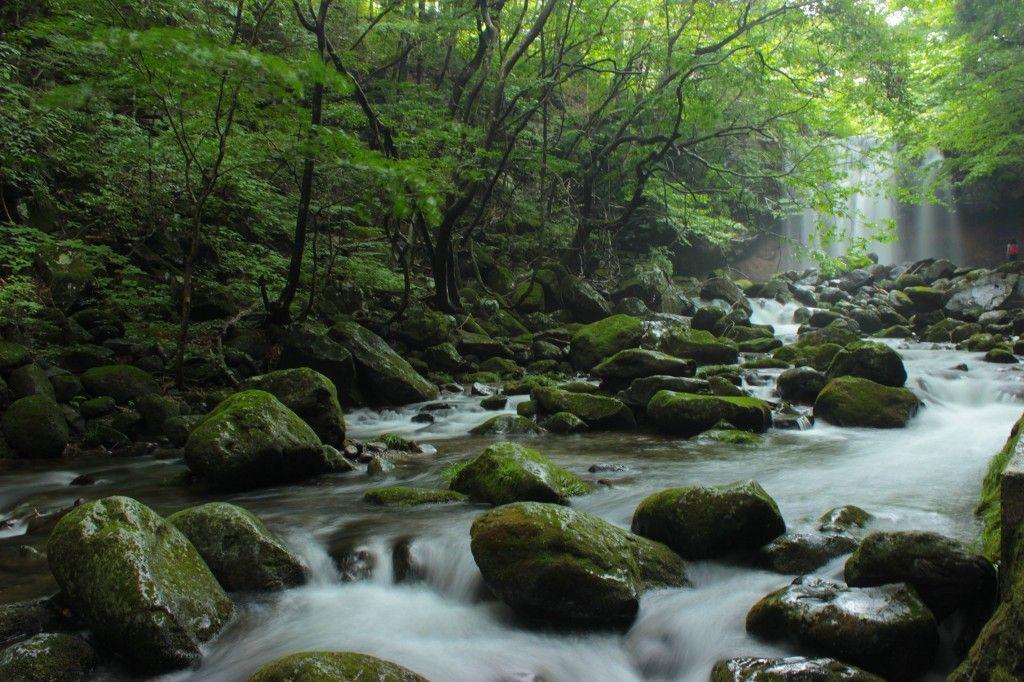 心なごむ渓流の風景