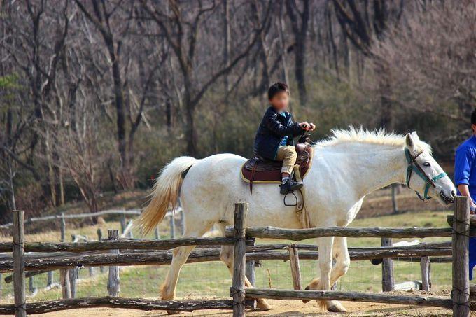 那須山をバックに白馬の王子様気分を満喫!