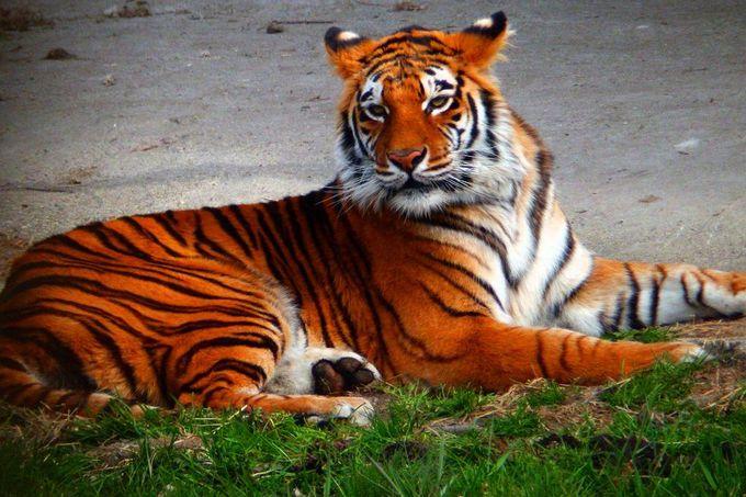 猛獣の生態をウォッチ!野生の王国「那須サファリパーク」