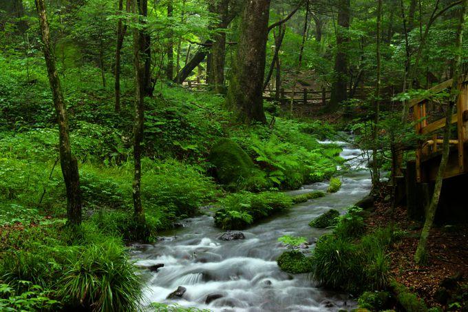 全国名水百選1位!美しい水に癒やされる観光名所「尚仁沢湧水群」
