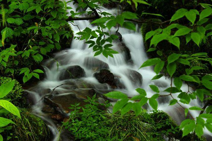 絵のような湧水渓流の美しい光景が広がっています。