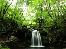流れる風が気持ち良い栃木「県民の森」で滝と渓流散歩を楽しもう|栃木県|トラベルjp<たびねす>