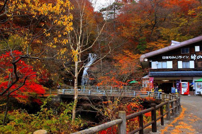 峠の茶屋は真っ赤なもみじと白滝が織りなす紅葉の絶景ポイント!