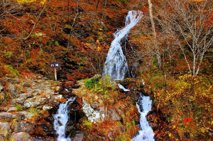 紅葉に映える「白滝」