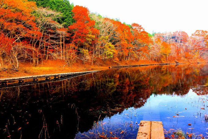 """""""大沼""""に映る紅葉はため息が出るほどの絶景です。"""