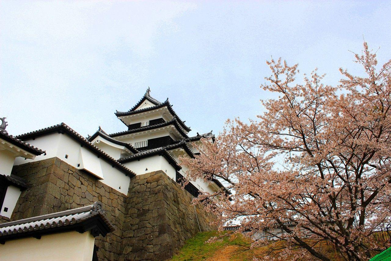 悲しい伝説の「おとめ桜」は今も艶やかに城内を彩ります。