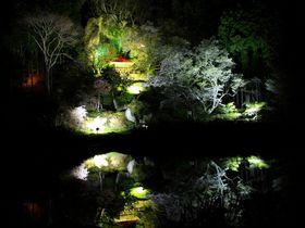 那須高原の桜の魅力は歴史伝説の眠る古代桜の名所にあり!