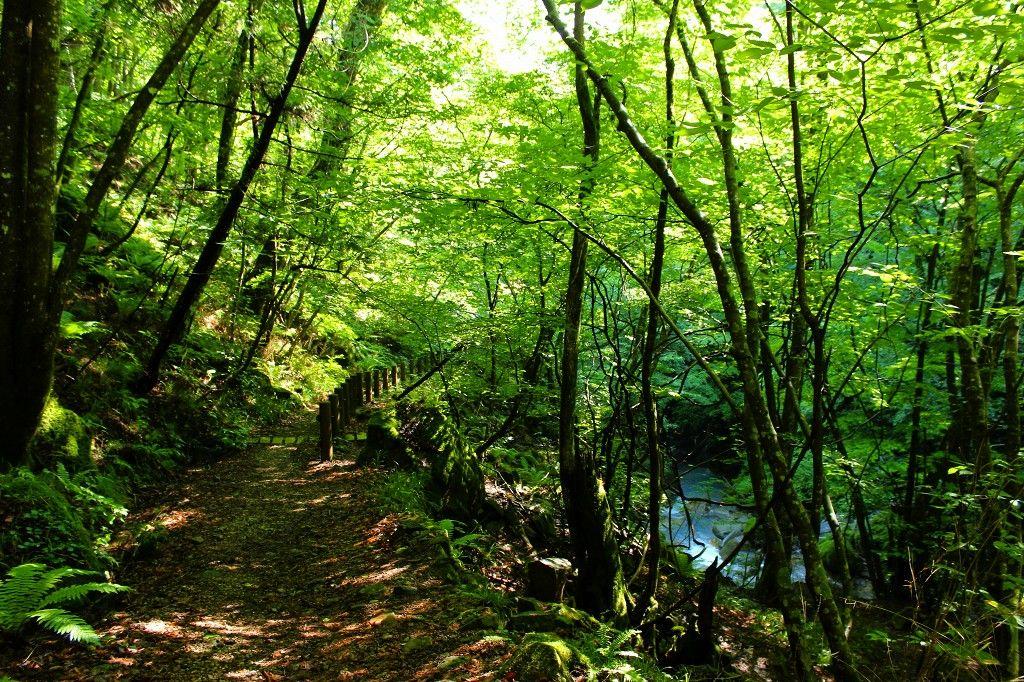 スッカン沢渓流の原生林の緑とスッカンブルーの流れに癒される♪