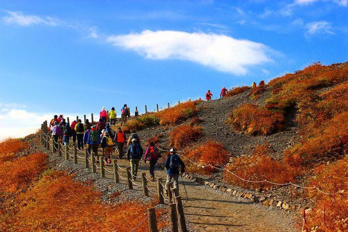 ロープウェイでわずか4分、おてがる絶景紅葉登山のスタートです!