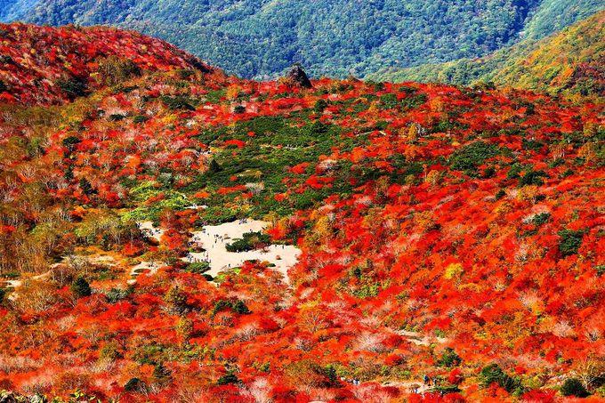 茶臼岳の麓「牛ヶ首」からの「姥が平」の紅葉を堪能しよう!!