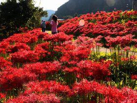 那須高原・秋の風物詩!圧巻の彼岸花大群生地「簑沢彼岸花公園」|栃木県|トラベルjp<たびねす>