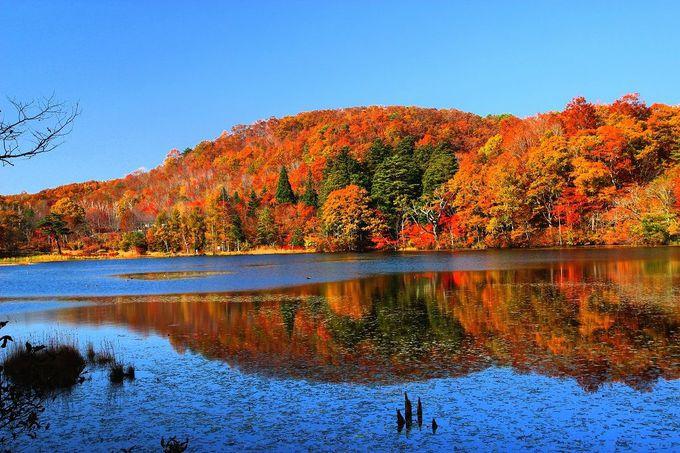 四季の内で一番混雑するのは紅葉の秋!「観音沼森林公園」
