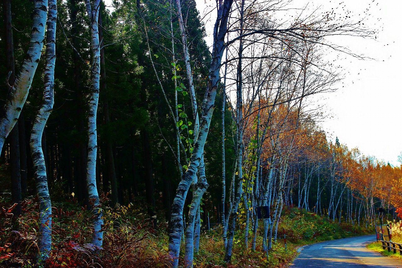 観音沼森林公園の周辺には、見どころはまだある!