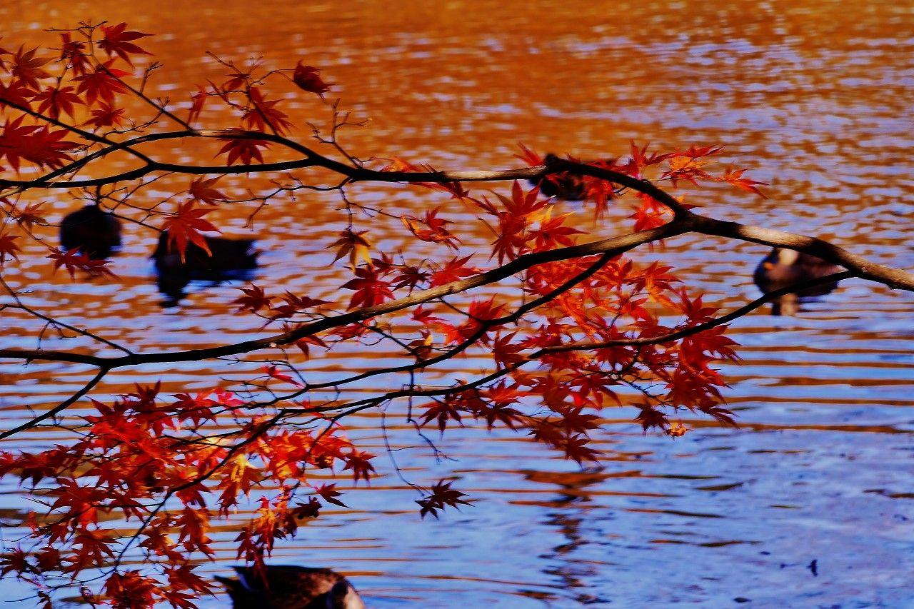全長3,2kmの整備された遊歩道で満喫できる絶景の紅葉美!