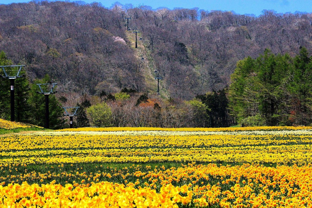 期間限定、那須高原のナイトゴンドラで満天の星空鑑賞