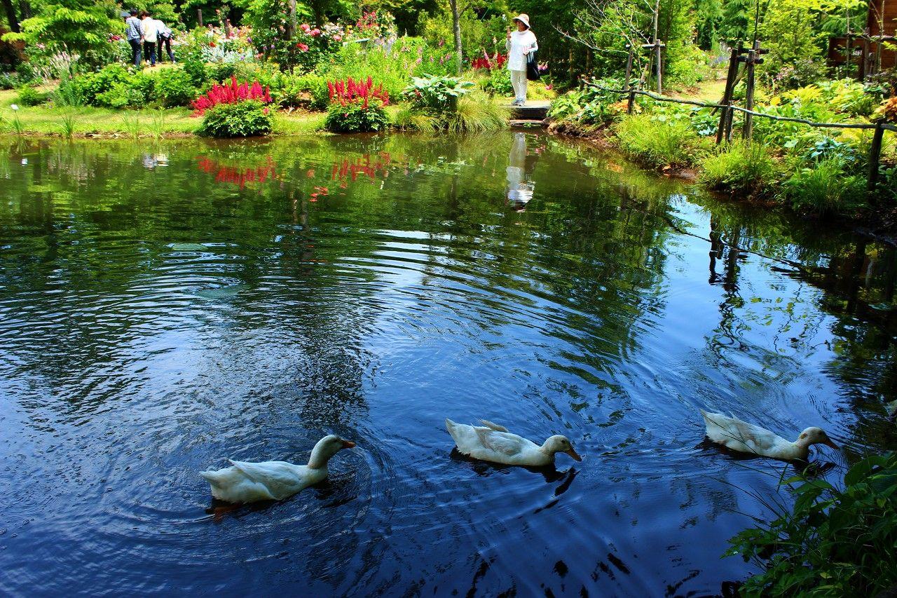 ガーデンの池の周辺は、絵画のような見事なお花の風景