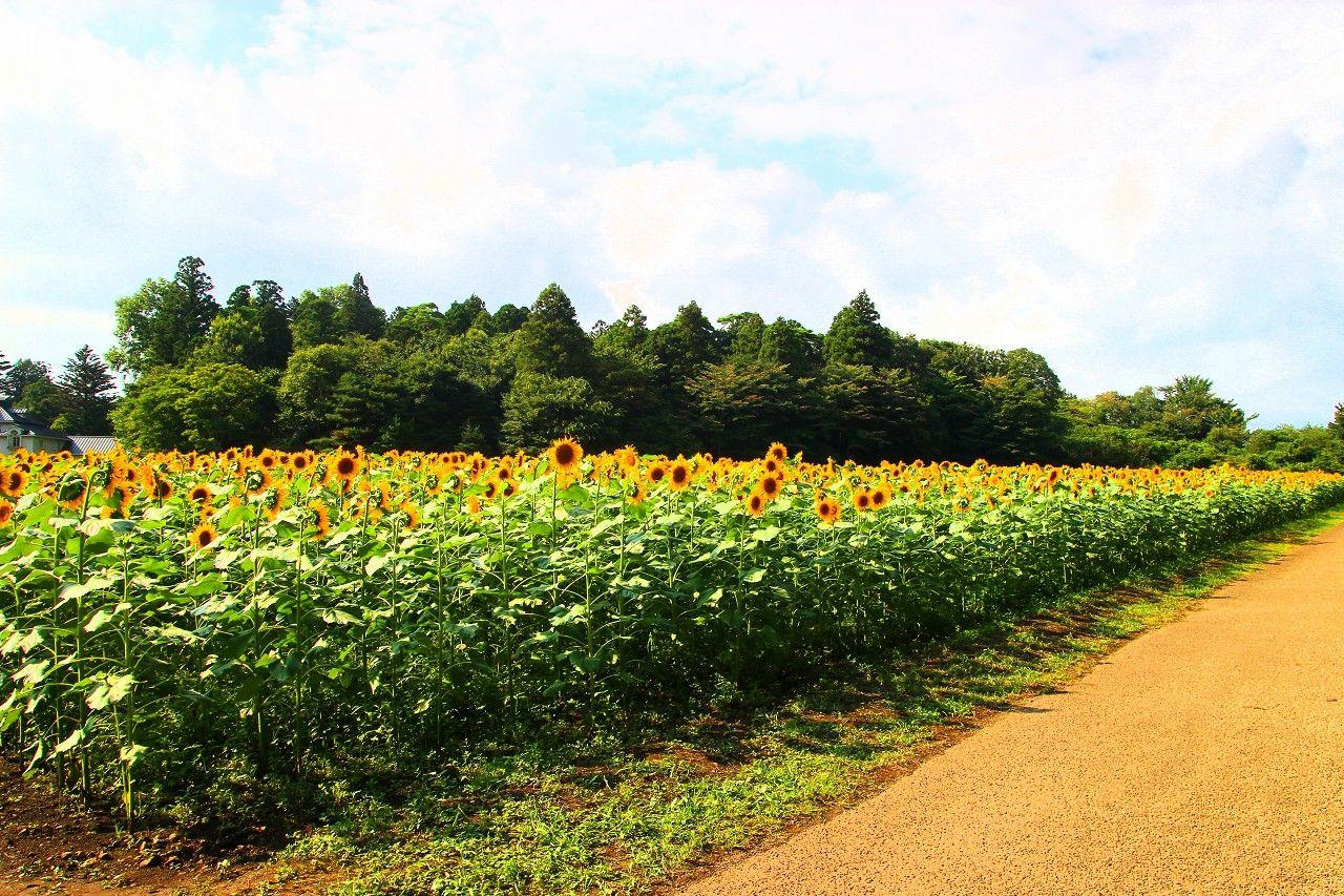 7.5ヘクタールの森の中にある広大なお花畑は一見の価値あり