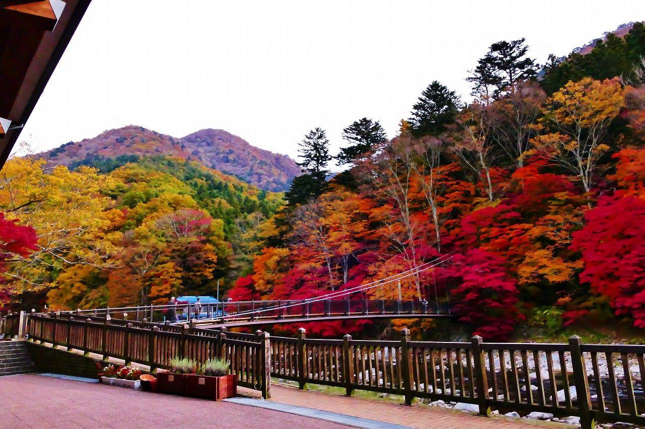 「紅の吊り橋紅葉」ベストな鑑賞のタイミングは?