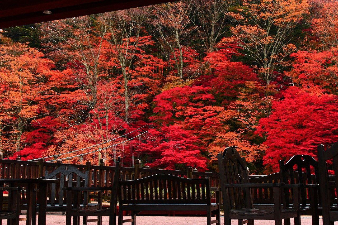 絶景の撮影スポット!息を呑むほどの紅葉が楽しめる!