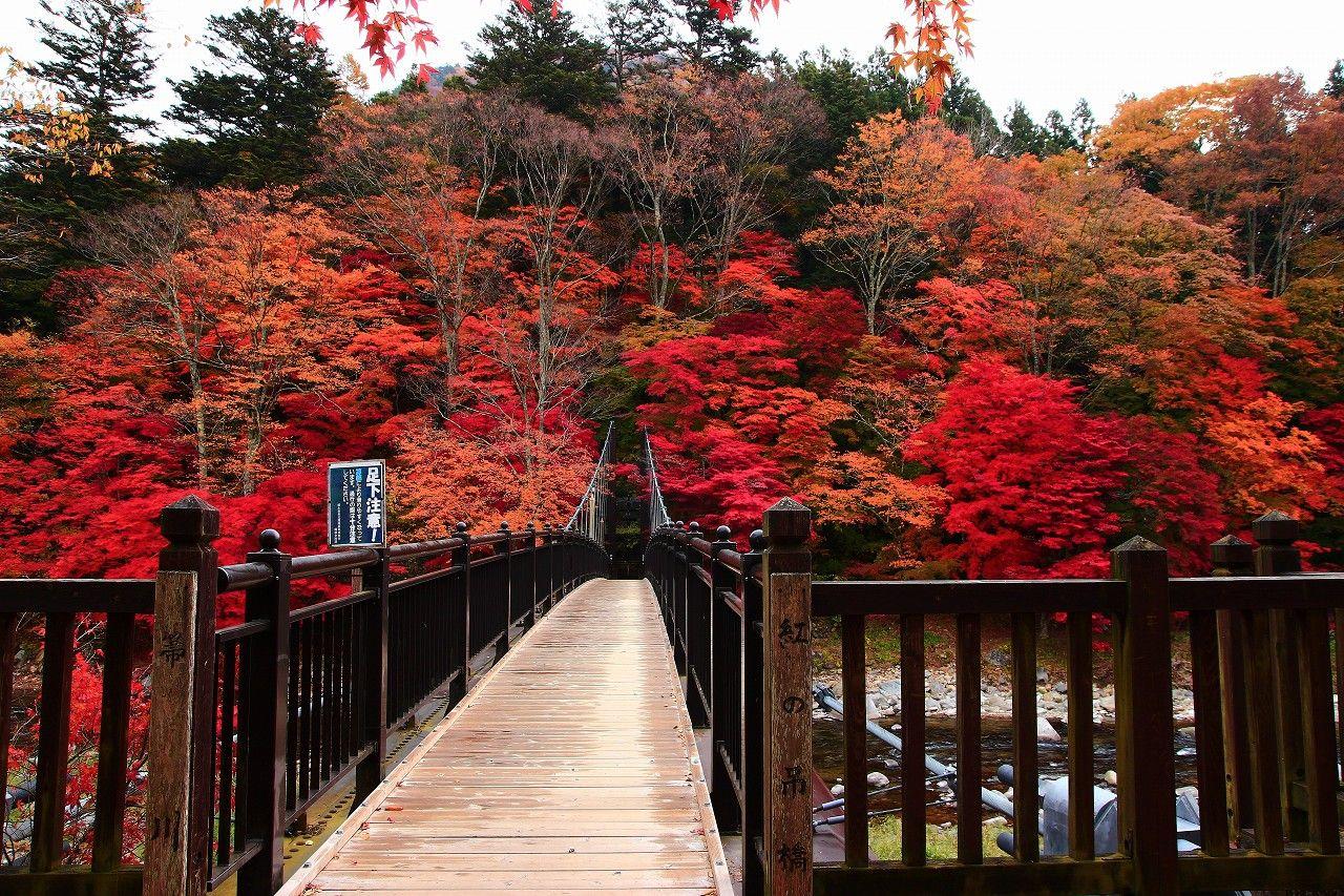 塩原温泉街のド真ん中が紅色に萌えあがる!「紅の吊り橋」