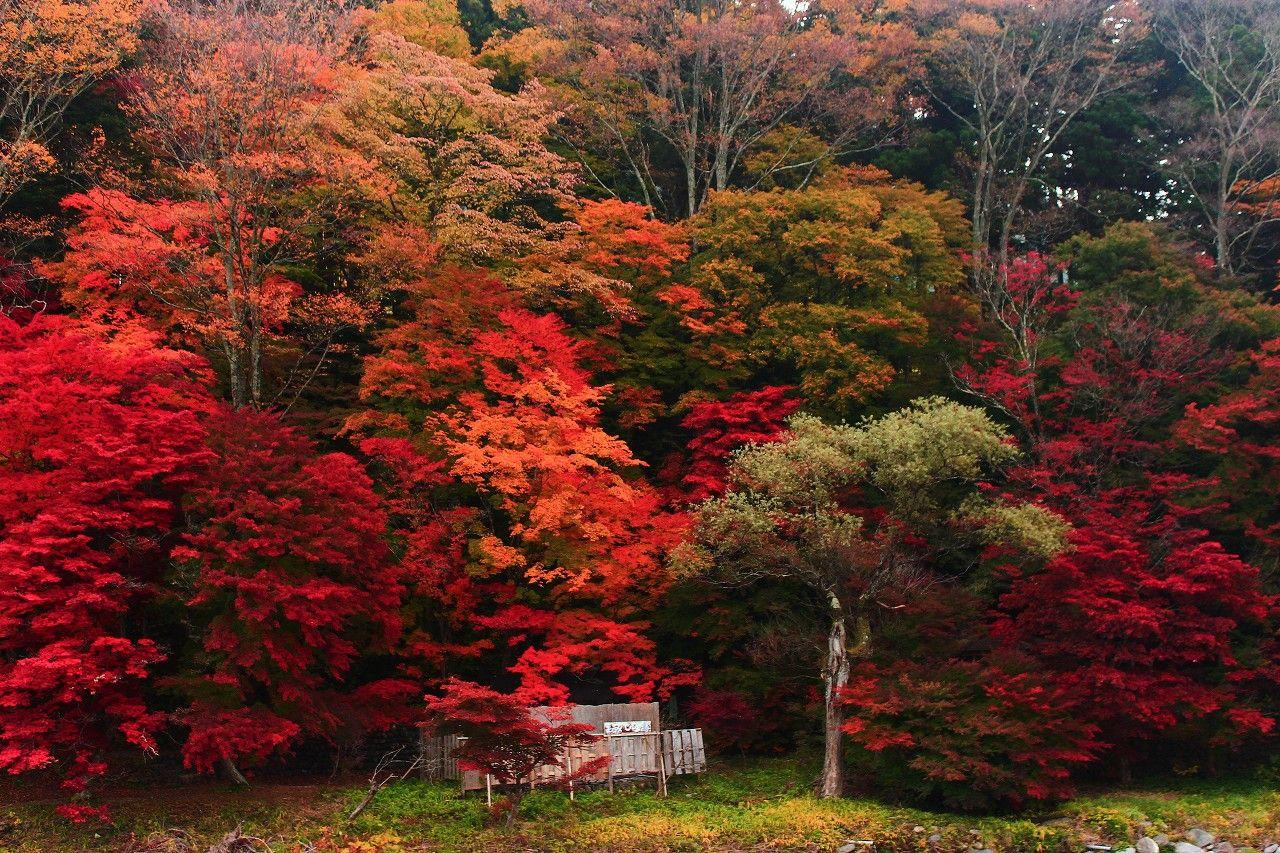 対岸の紅葉に囲まれた露天風呂「もみじの湯」はいかが!
