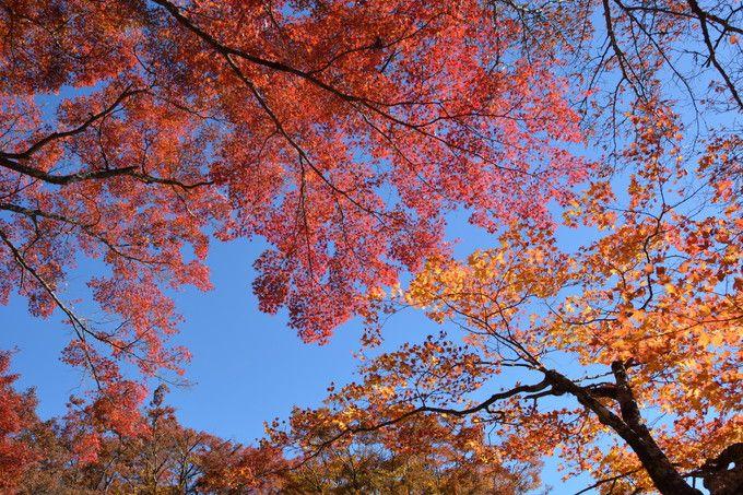 錦秋の幕開けなら京都・高雄神護寺へ!色とりどりの紅葉を堪能しよう