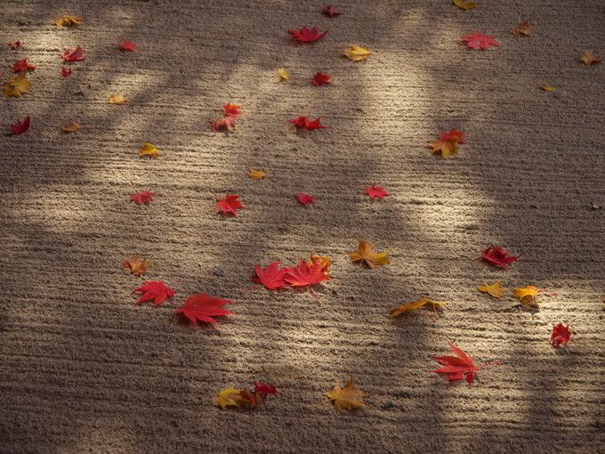 紅葉と庭園が織りなす絶妙の色彩!京都・洛北「詩仙堂」