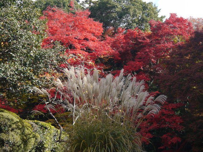 庭園の色彩