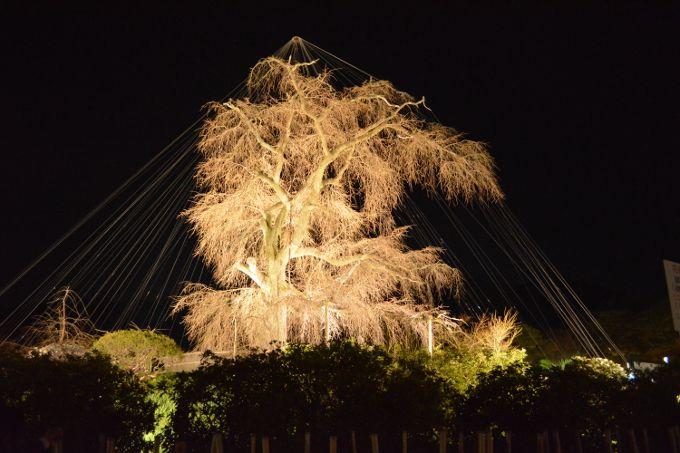 京都巡り初めは、春の訪れを告げる「京都・東山 花灯路」散策路から!