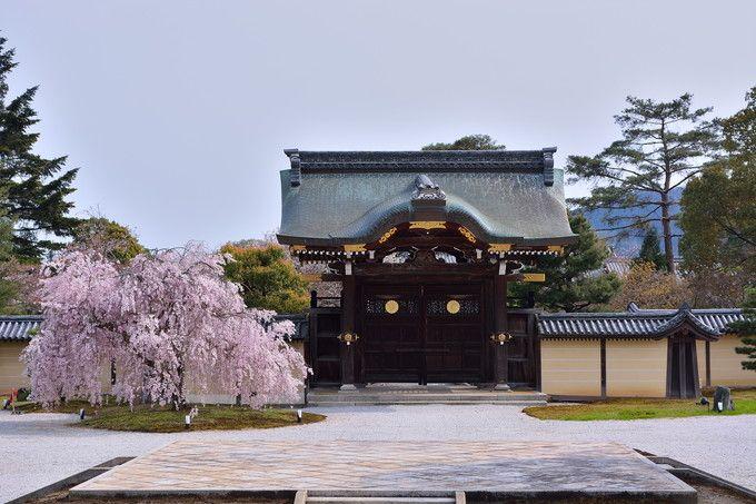 華道際も合わせて楽しみたい!勅使門のしだれ桜が秀逸「京都・大覚寺」