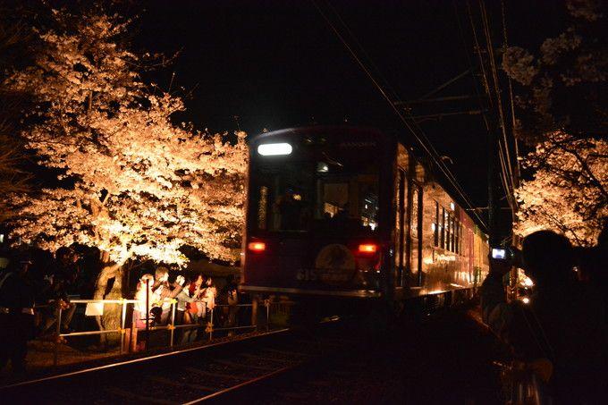 """ライトアップは""""夜桜電車""""で!京都・嵐電「桜のトンネル」"""