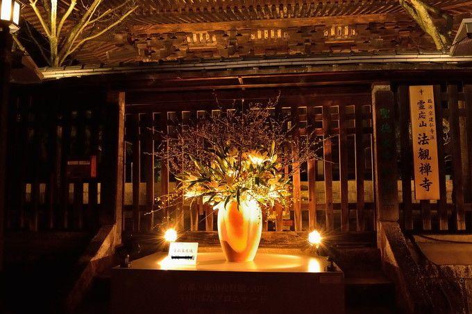 京都「東山花灯路」で必見!春の到来を告げるいけばな展示の鑑賞ポイント