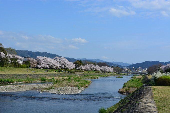 のんびりと流れる賀茂川