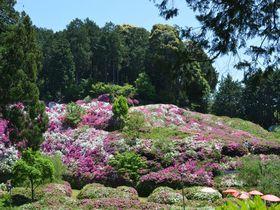 息をのむ艶やかさ!京都・花の寺「三室戸寺」2万株のつつじを見逃すな|京都府|トラベルjp<たびねす>
