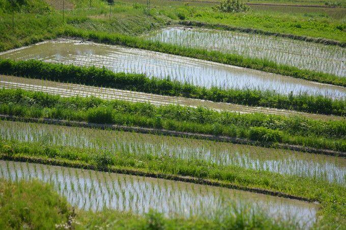 京都越畑・樒原の棚田 初夏景色