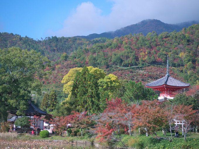 錦秋の大覚寺大沢の池風景