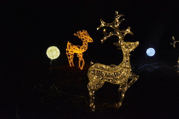 師走の京都府立植物園の「クリスマスイルミネーション」