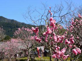 小野小町伝説の京都山科「隨心院 小野梅園」で春を探しませんか?|京都府|トラベルjp<たびねす>