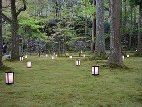 観光スポット多数!春爛漫・京都「大原の里」で桜巡り|京都府|トラベルjp<たびねす>