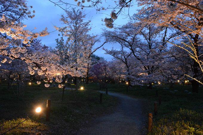 京都府立植物園ライトップ
