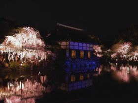夜桜を満喫!京都・桜ライトアップおすすめ5選|京都府|トラベルjp<たびねす>