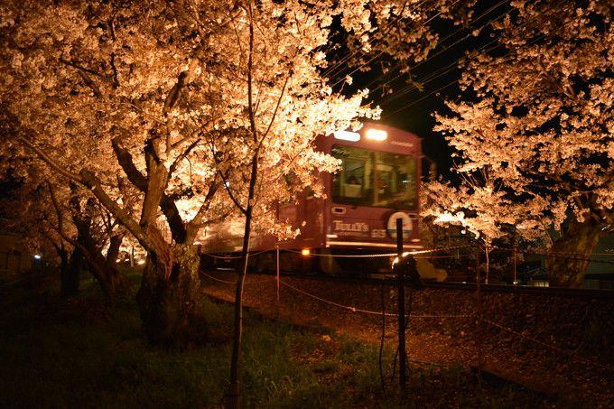 洛西 嵐電桜のトンネルライトアップ